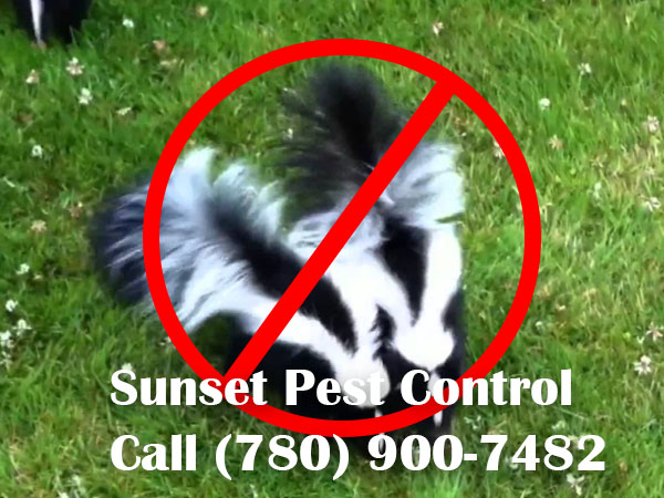 Leduc Skunk Removal Company