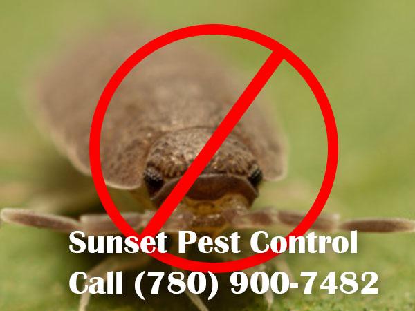 Sow Bugs Problem in Nisku Alberta