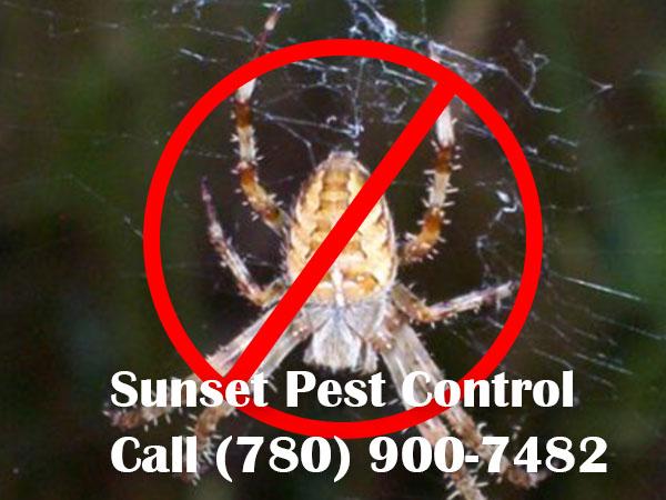 Spider Extermination in Leduc